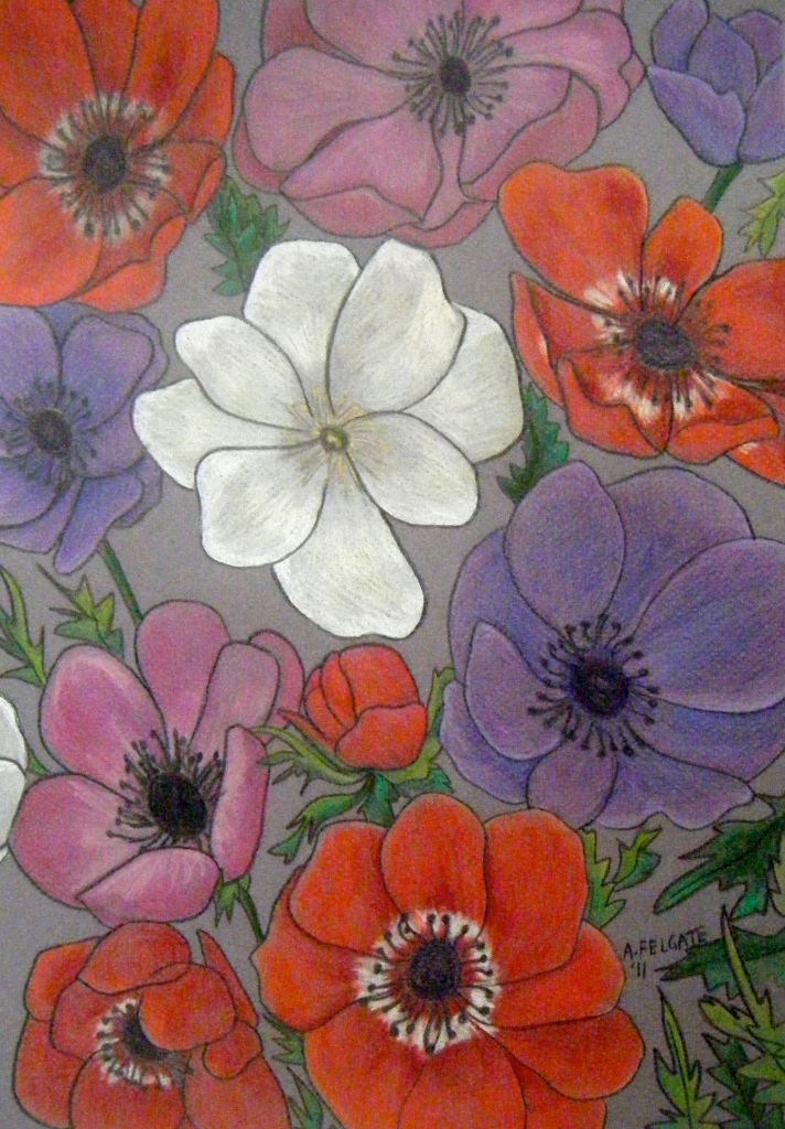 Mixed Anemones Coloured Pencil on paper 300mm x 400mm AUD$300
