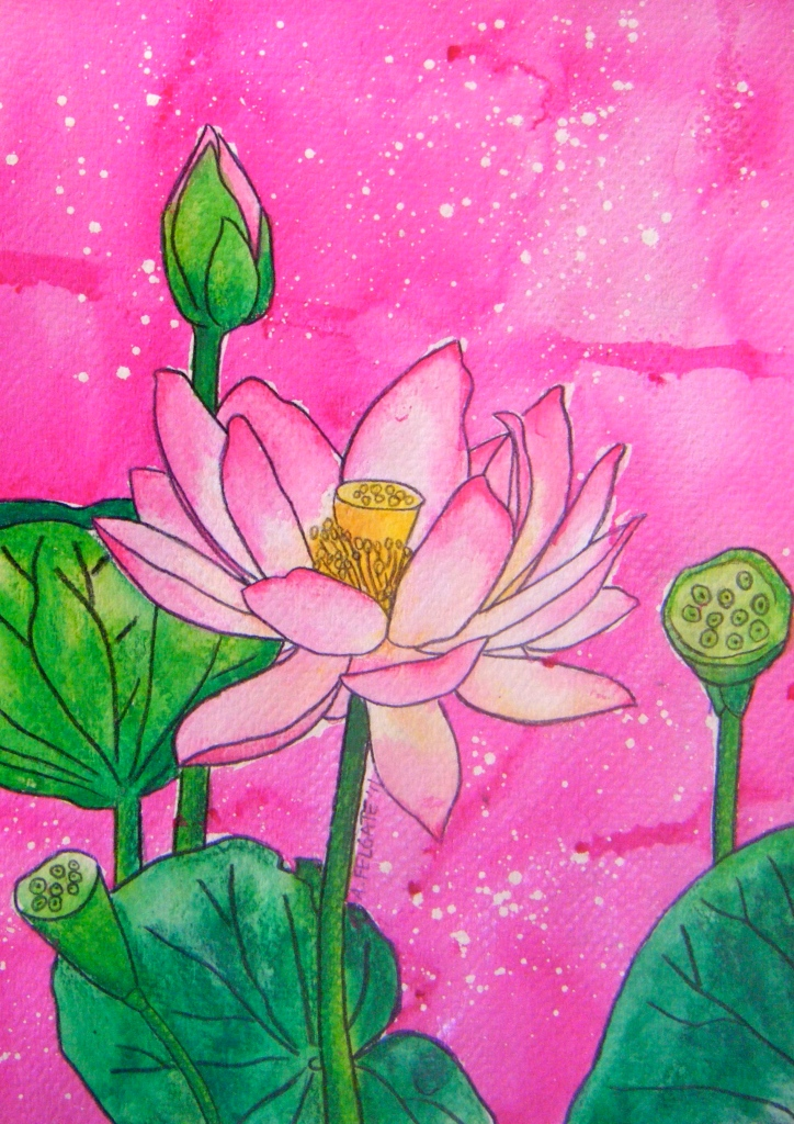 Pink Lotus Watercolour pencil and ink on paper 200mm x 300mm AUD$200