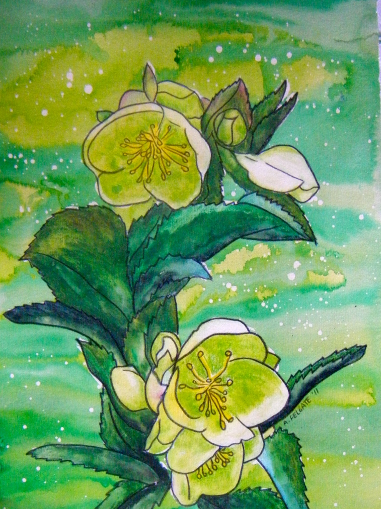 Green Hellebores Watercolour pencil and ink on paper 200mm x 300mm AUD$200