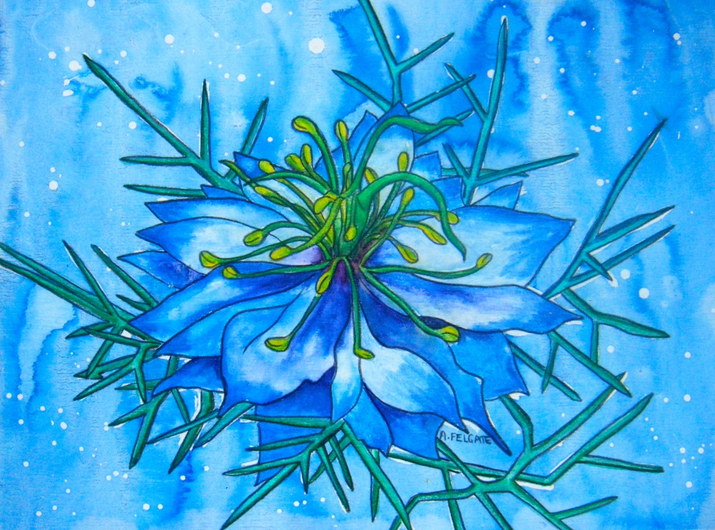 Blue Nigella Watercolour pencil and ink on paper 200mm x 300mm AUD$200
