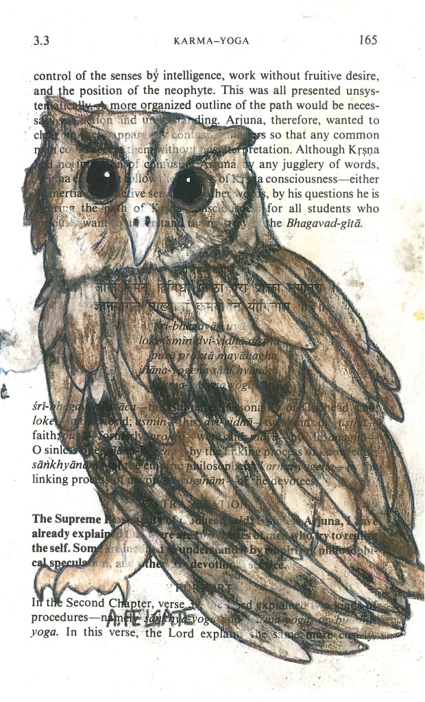Owl 13
